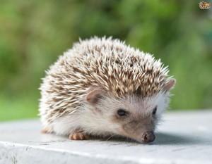 Google Hedgehog mise à jour qui pénalise les sites par rapport à leur référencement social